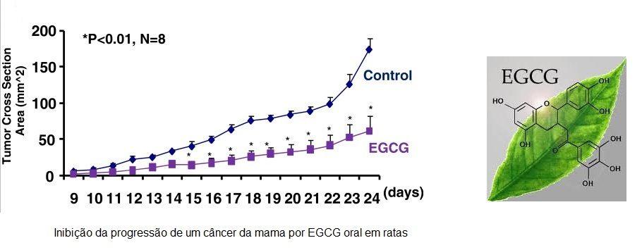 grafico inibicao tumor por EGCG