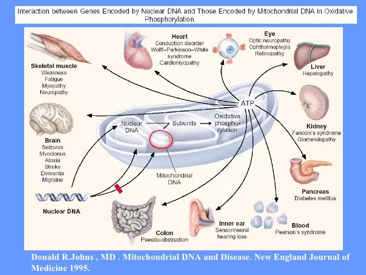 doencas-mitocondriais-23-728