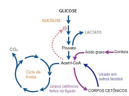 ciclo-de-randle